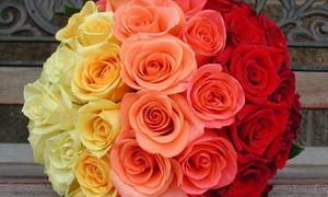 Цветы со скидкой Мистер Рич